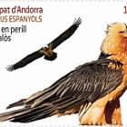 Europa 2021 - Endangered National Wildlife - Bearded Vulture - CTO