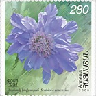 2008 Flora and Fauna of Armenia Flowers - Scabiosa Caucasica
