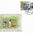 2018 Flore et Faune d'Arménie - Ixiolirion Montanum et Mustela Nivalis
