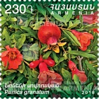Flora and Fauna of Armenia - Punica Granatum