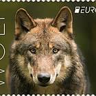 Europa 2021 - Wolf