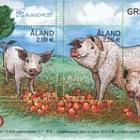 Nouvel an lunaire 2019 - Année du cochon