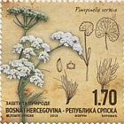 Protection of Nature - Pimpinella serbica