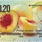 Fruits - Apricot