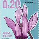 Flowers - Cyclamen Purpurascens