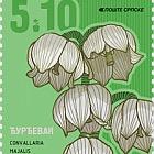 Flowers - Convallaria Majalis