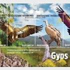 Endangered Species - Griffon Vulture