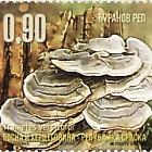 Medicinal Mushrooms - Turkey Tail