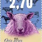 Domestic Animals - Sheep