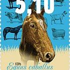 Domestic Animals - Horse