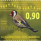Fauna 2015 - Birds - Siskin