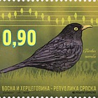 Fauna 2015 - Birds - Blackbird