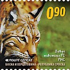 Wild Animals 2011
