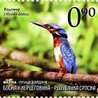 Fauna - Birds of Bardaca - The Common Kingfisher