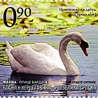 Fauna - Birds of Bardaca - Mute Swan or Humpback