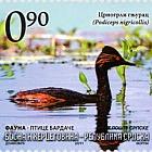Fauna - Birds of Bardaca - Black-Necked Grebe