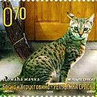 Fauna 2009 - Cats - Domestic Cat