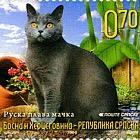 Fauna 2009 - Cats - Russian Blue Cat