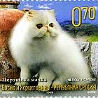 Fauna 2009 - Cats - Persian Cat