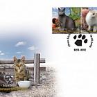 Fauna 2009 - Cats