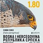 Europa 2019 - National Birds - Peregrine Falcon