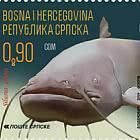 Fauna 2019 - Catfish