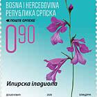 Flora -Illyrian Gladiolus