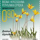 Flora - The Wild Tulip