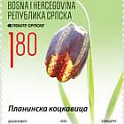 Flora - Fritillaria Montana Hoppe ex W.D.J.Koch