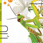 Insects - Mantis