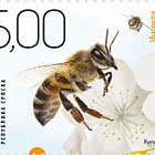 Insects - The Bee