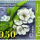 Flora 2012- Cherry Flower & Cherry