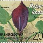 Flora 2015