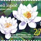 Flora 2016