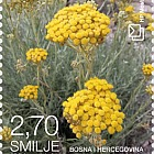 Flora 2017 - Helichrysum -  (Bloom)