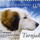 Tornjak - Bosnian Herzegovinan Croatian - Shepherd Dog