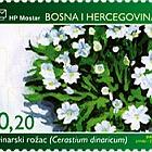 Flora 2006 - Dinaric Chickweed