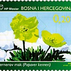 Flora 2006 - Kerner's Poppy