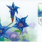 Flora 2005 - Dinarian Gentians - Maxi Card