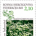 2009 Myths and Flora - (Costmary)