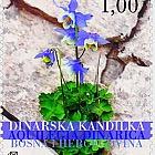 Flora 2004 - Dinarian Kandilka