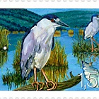 Fauna 2009 - (Crowned Night Heron)