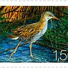 Fauna 2009 - (Water Rail)