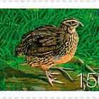 Fauna 2009 - (Quail)