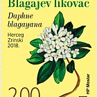 Flora 2018 - Daphne Blagayana
