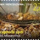 Fauna 2018 - Fish - Cobitis Herzegoviensis