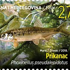 Fauna 2018 - Fish - Phoxinellus Pseudalepidotus