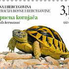 Fauna 2019 - Land Turtle (Testudo Hermanni)