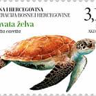 Fauna 2019 - Loggerhead Sea Turtle (Caretta Caretta)