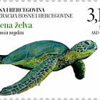 Fauna 2019 - Green Turtle (Chelonia Mydas)